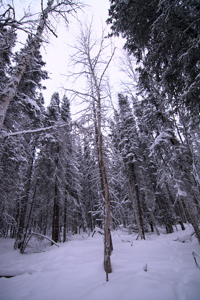 Standing Alone In The Forest