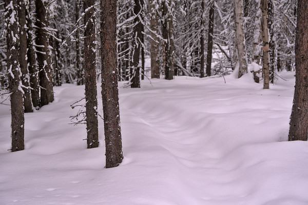 Covered Trail