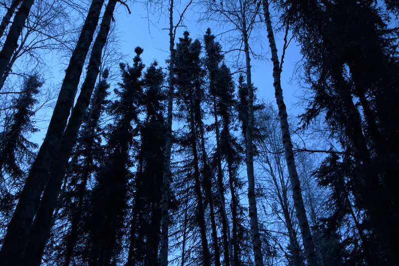 Dark forest during the blue hour
