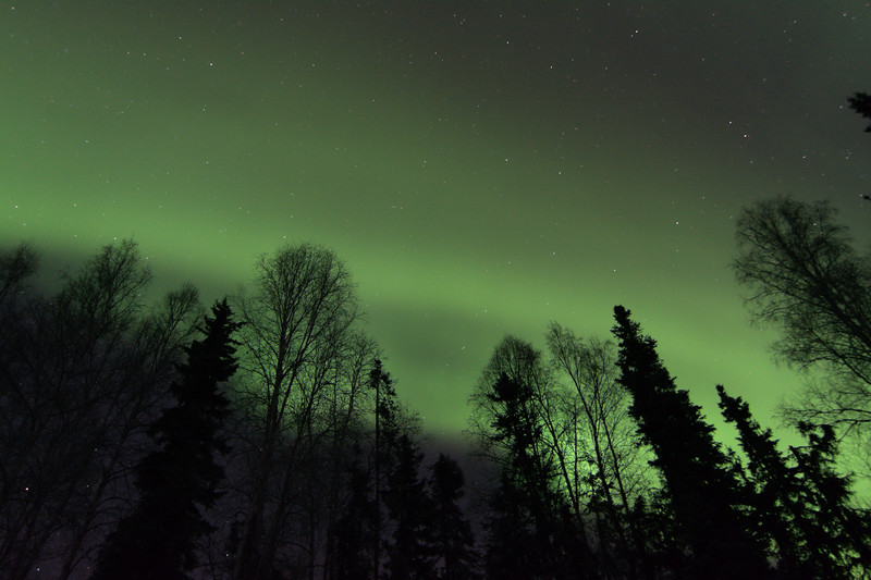 Aurora borealis over a silhouetted forest