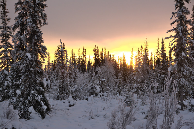 Sunrise over a snowy forest