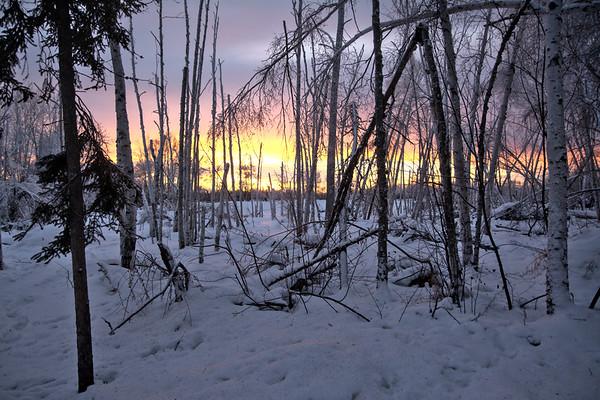 Birch Swamp Sunset
