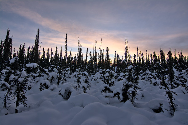 Snow, Forest, Light
