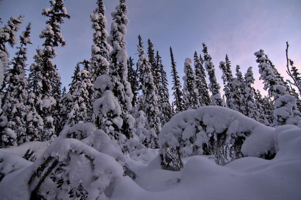 Snow-covered forest at sunset
