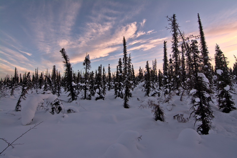Snowy boreal forest at sunset