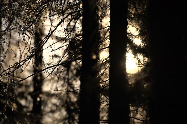 A little Sun through the trees