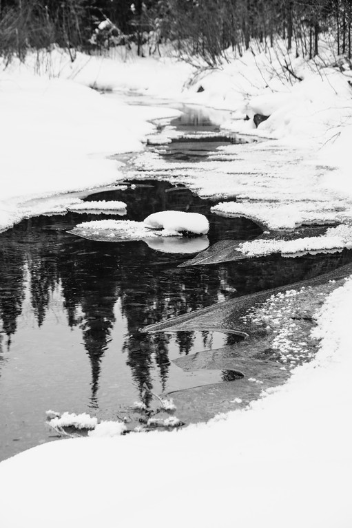 Reflection of spruce trees in a stream through the snow