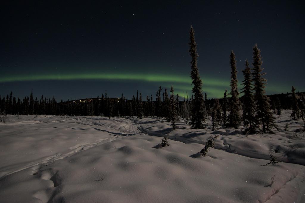 aurora borealis over a snowy meadow