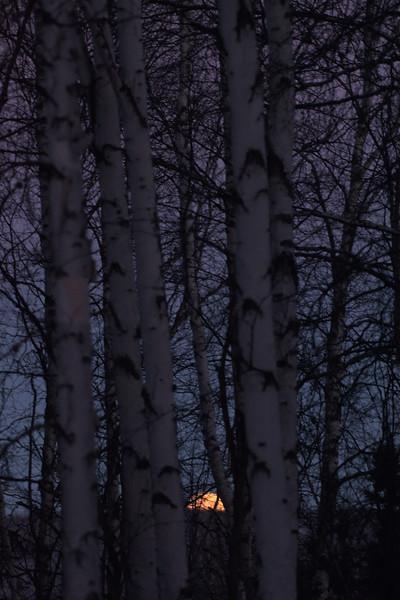 moon setting through the trees