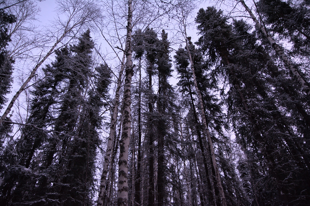 Forest in the twilight