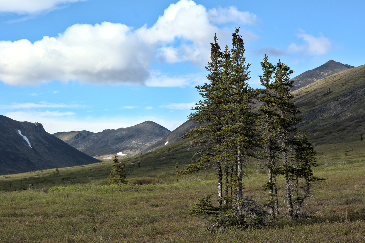 View up the the Nome Creek Valley in the White Mountain National Recreation Area, Alaska