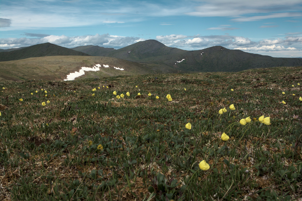 Pinnell mountain and rooted poppies along the Mastodon Dome hike