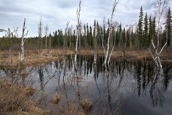 Seasonal Wetlands (Boreal Forest)