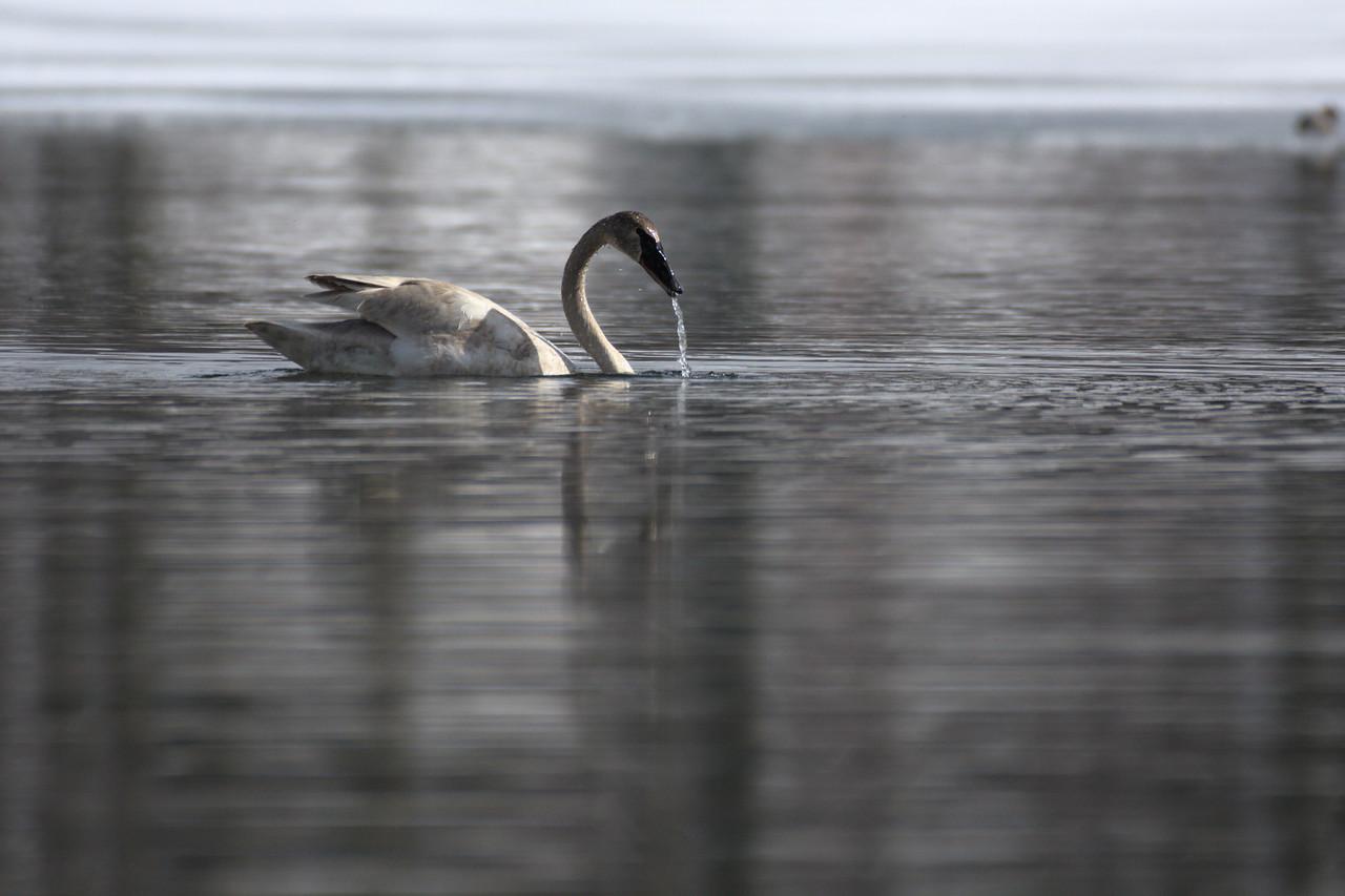 Fairbanks Birding Spring 2021