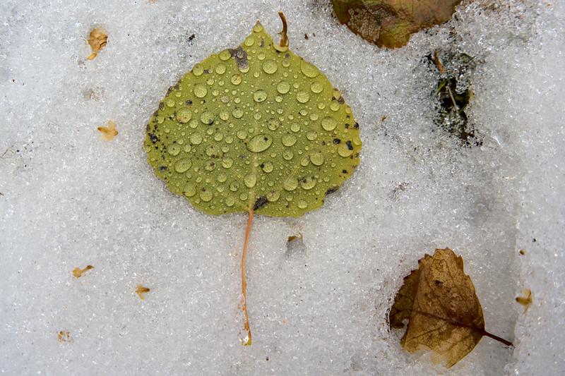 Beading Birch Leaf