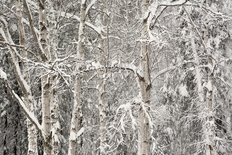 It Just Keeps Snowing!