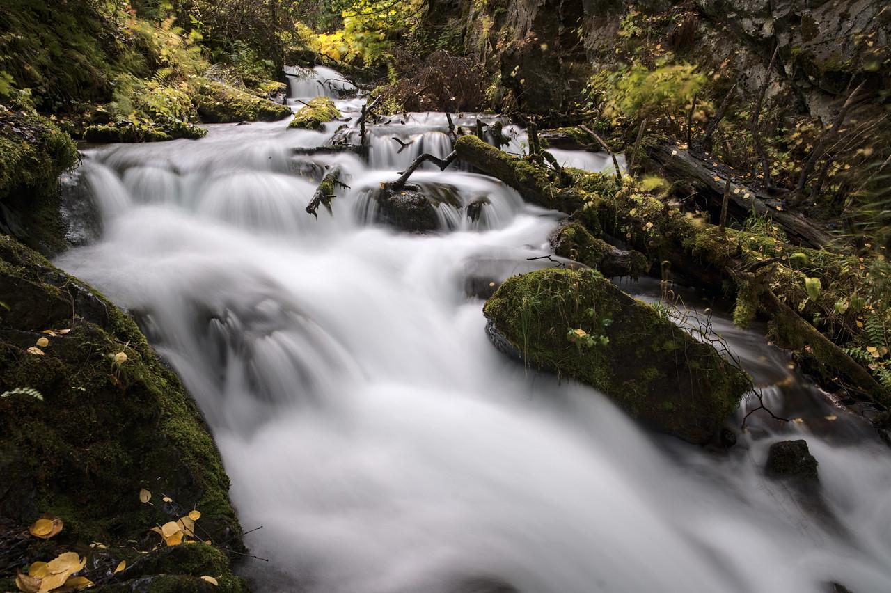 Mossy logs and rocks in McHugh Creek
