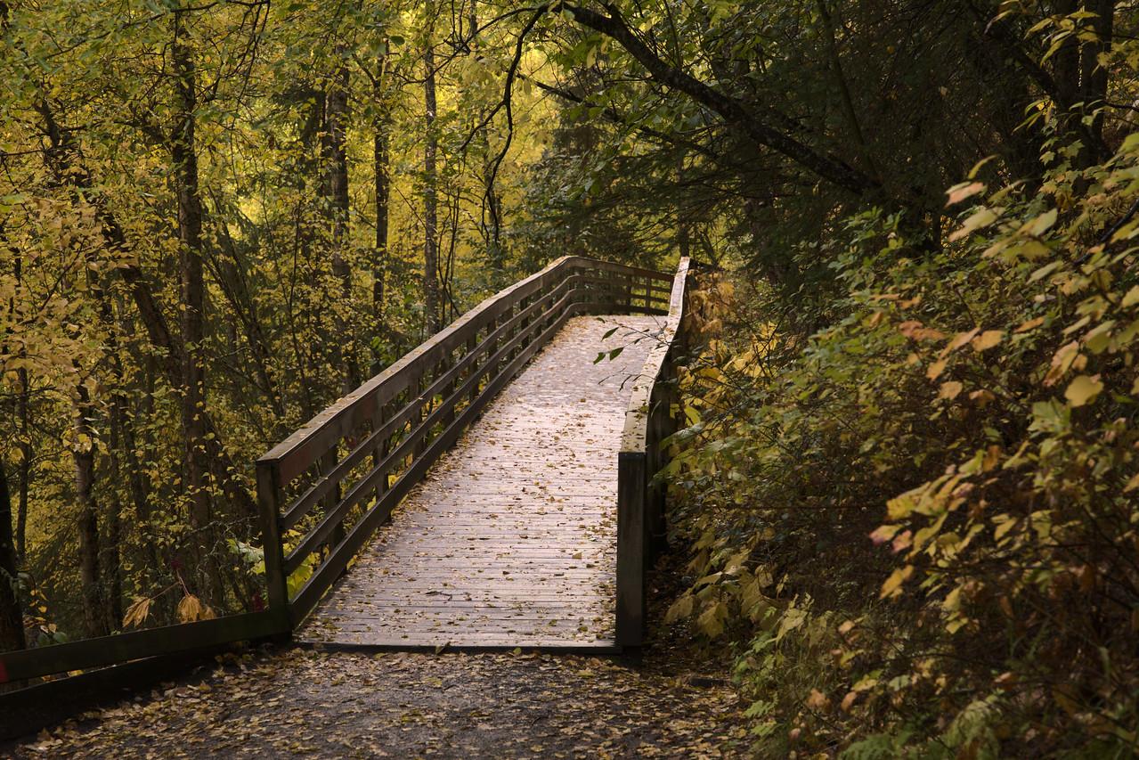 Wooden walkway on the Thunderbird Falls Trail