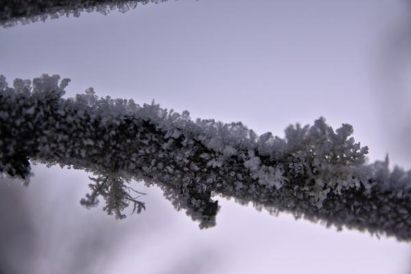 Frosty Branch