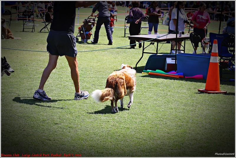 Pawfest   Largo Central Park April 7, 2012-IMG_5925
