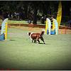 Pawfest   Largo Central Park April 7, 2012-IMG_5890