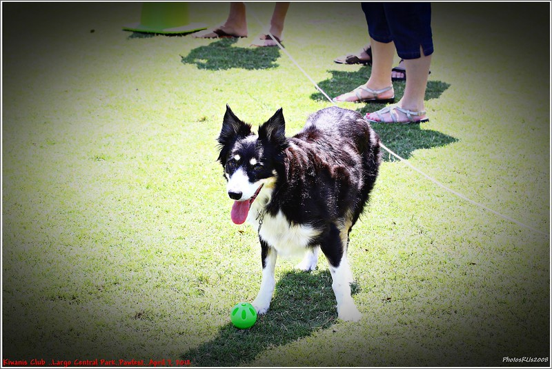 Pawfest   Largo Central Park April 7, 2012-IMG_5924