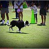 Pawfest   Largo Central Park April 7, 2012-IMG_5938