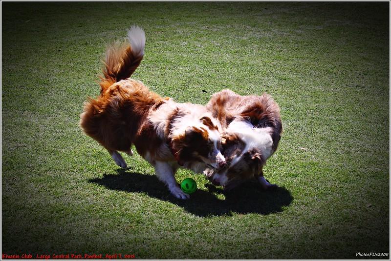 Pawfest   Largo Central Park April 7, 2012-IMG_5990