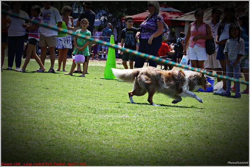 Pawfest   Largo Central Park April 7, 2012-IMG_6041