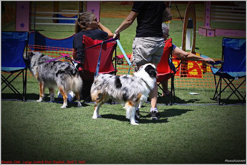 Pawfest   Largo Central Park April 7, 2012-IMG_5918