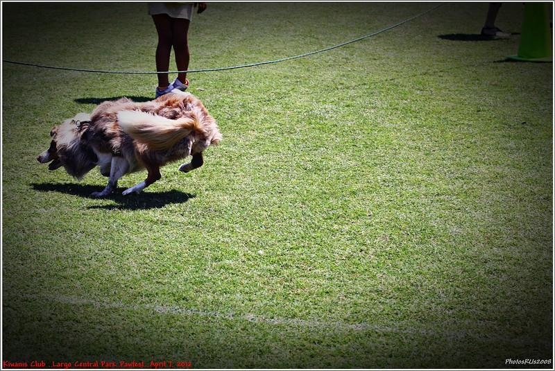 Pawfest   Largo Central Park April 7, 2012-IMG_5948