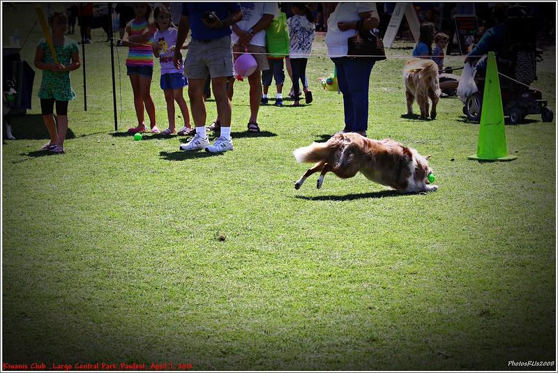 Pawfest   Largo Central Park April 7, 2012-IMG_5962