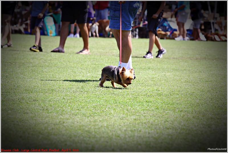 Pawfest   Largo Central Park April 7, 2012-IMG_6047