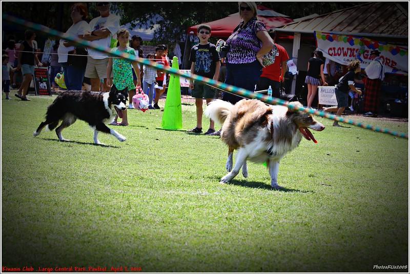Pawfest   Largo Central Park April 7, 2012-IMG_6038