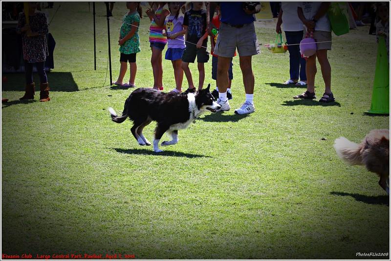 Pawfest   Largo Central Park April 7, 2012-IMG_5937