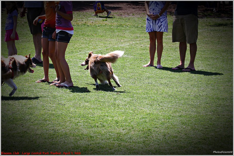 Pawfest   Largo Central Park April 7, 2012-IMG_6025