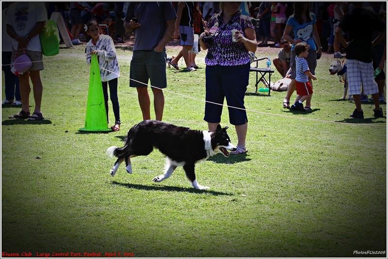 Pawfest   Largo Central Park April 7, 2012-IMG_5939