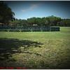 Largo Central Park April 6, 2012P1180353