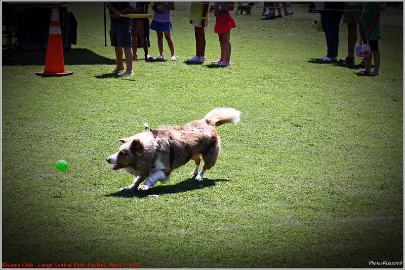 Pawfest   Largo Central Park April 7, 2012-IMG_6031