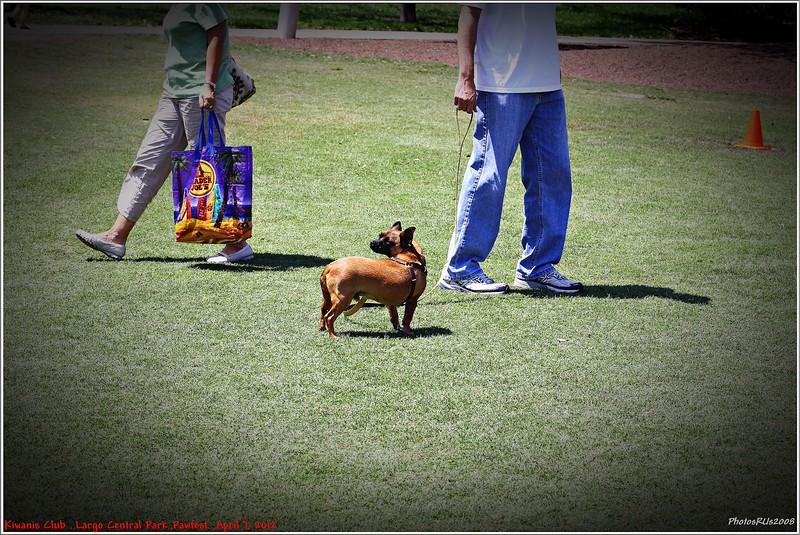 Pawfest   Largo Central Park April 7, 2012-IMG_6012