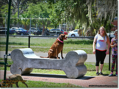 2014-06-30IMG_6063_ Dog Bone Run  Grand Opening   Largo,Fl