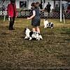 2015-01-18_P1183834_Pasco Fl  Kennel Club Dog Show   Brooksville,Fl