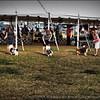 2015-01-18_P1183829_Pasco Fl  Kennel Club Dog Show   Brooksville,Fl
