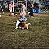 2015-01-18_P1183833_Pasco Fl  Kennel Club Dog Show   Brooksville,Fl