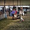 2015-01-18_P1183820_Pasco Fl  Kennel Club Dog Show   Brooksville,Fl