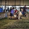 2015-01-18_P1183822_Pasco Fl  Kennel Club Dog Show   Brooksville,Fl