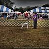 2015-01-18_P1183813_Pasco Fl  Kennel Club Dog Show   Brooksville,Fl