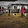2015-01-18_P1183825_Pasco Fl  Kennel Club Dog Show   Brooksville,Fl
