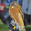 2015-04-04__4046404_Booner Nature Park Ecofest,Largo,Fl