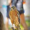 2015-04-04__4046417_Booner Nature Park Ecofest,Largo,Fl